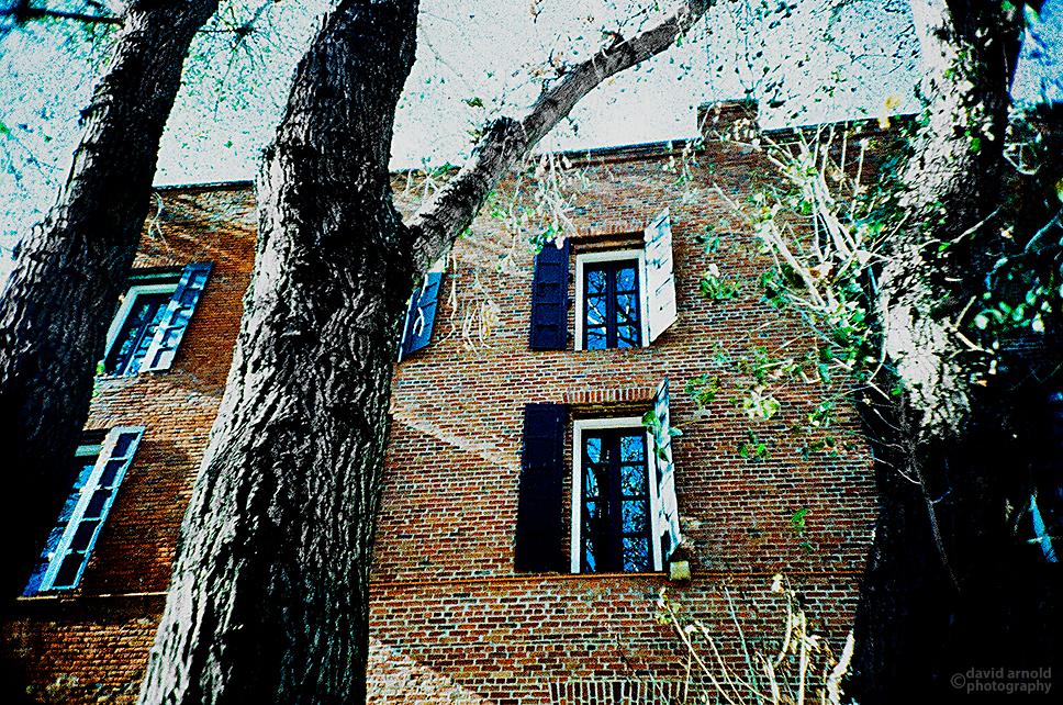 Trees, Pioneer Park, Old Town Sacramento. (Kodak EliteChrome EB3 film, process C-41.)
