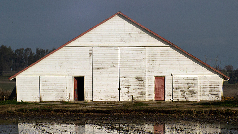 Barn in the Yuba County Rice Fields