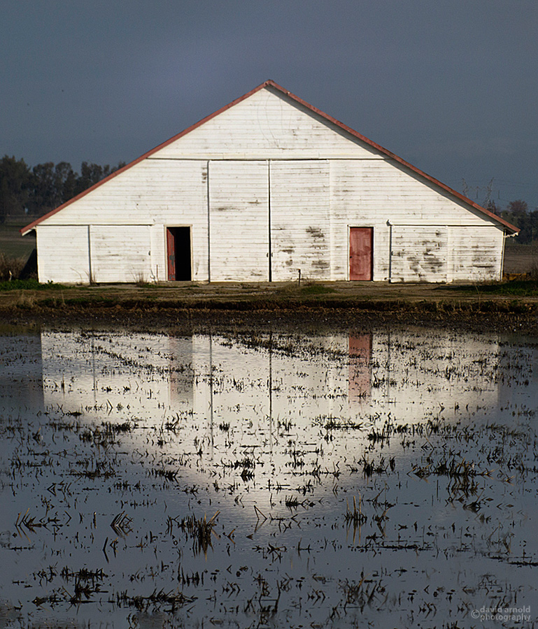 Barn in the Yuba County Rice Fields