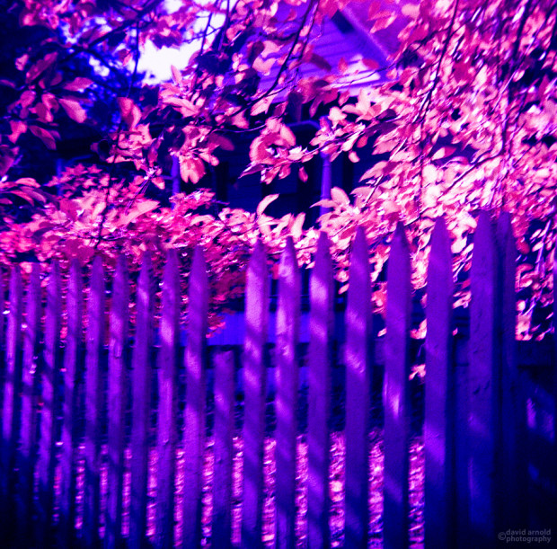 Picket Fence, North Bloomfield, California