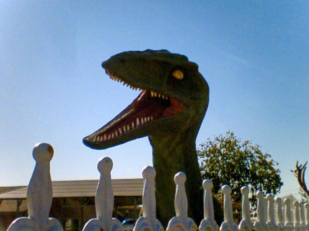 T-Rex, Highway 20, Marysville, California