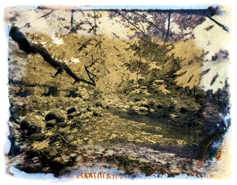Branches, Oregon Creek, Sierra Nevada, California