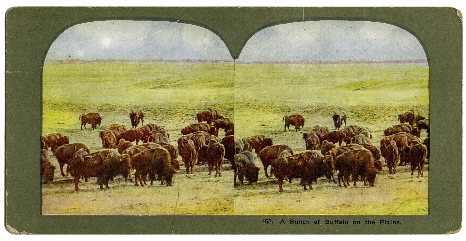 """""""A Bunch of Buffalo on the Plains,"""" T. W. Ingersoll Stereo Card Collection, 1898"""