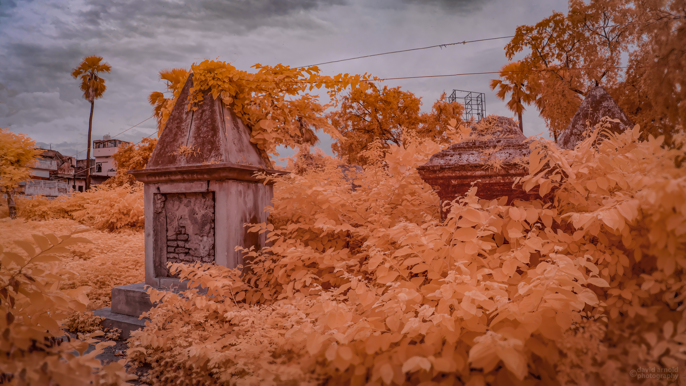 Overgrown tombs in British Cemetery, Buxar, India