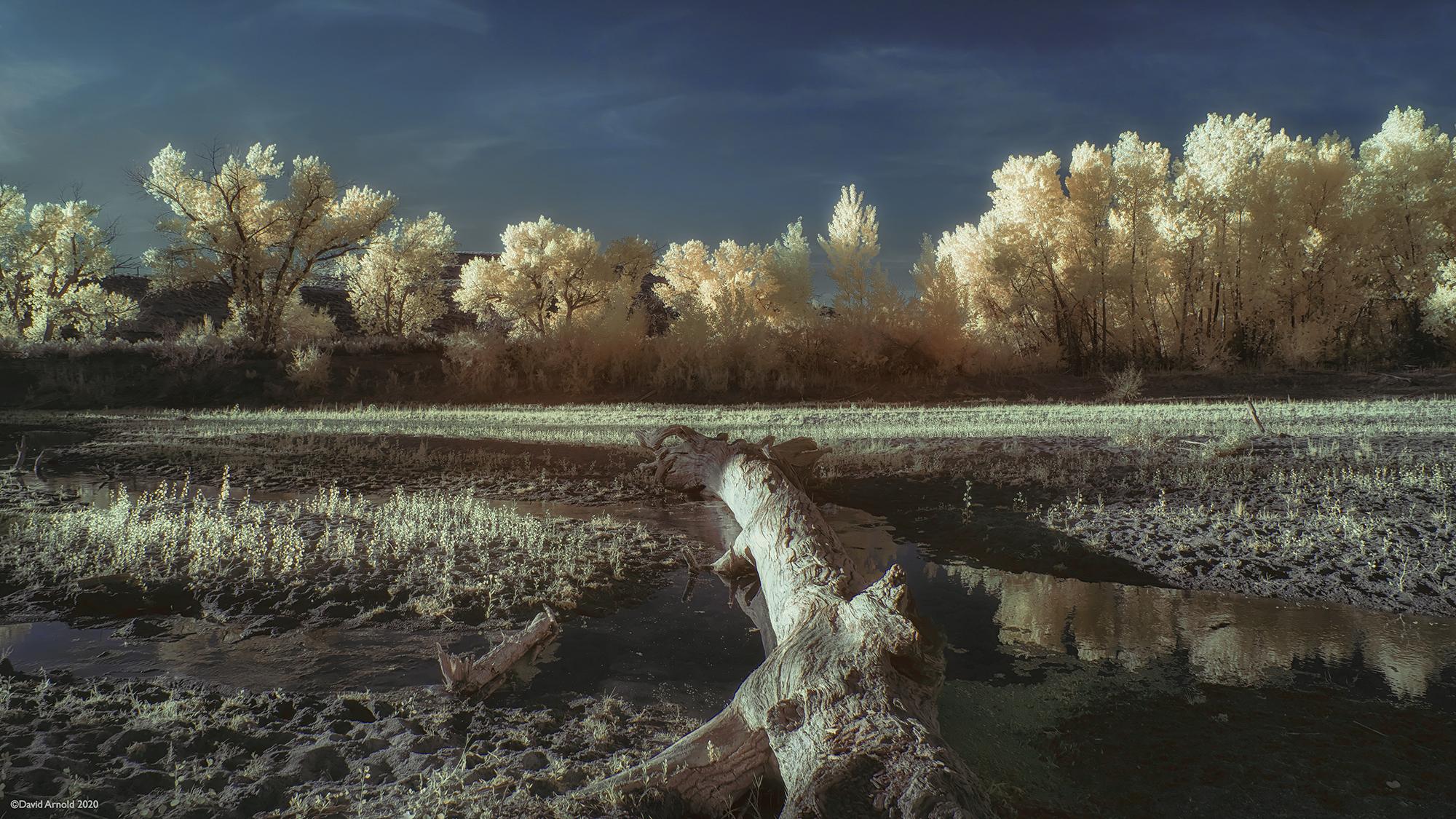Fallen Tree, Carson River, Fort Churchill, Nevada
