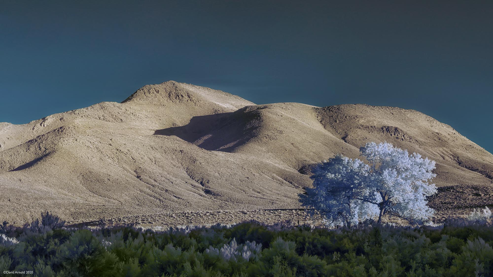 Lone Cottonwood, Fort Churchill, Nevada