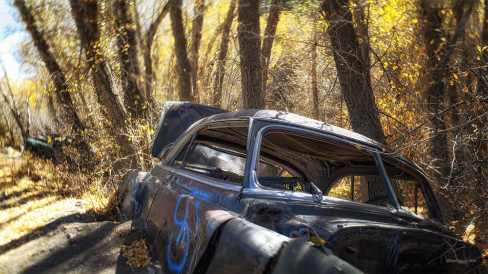 Abandoned Sedan along a creek bed with trees.