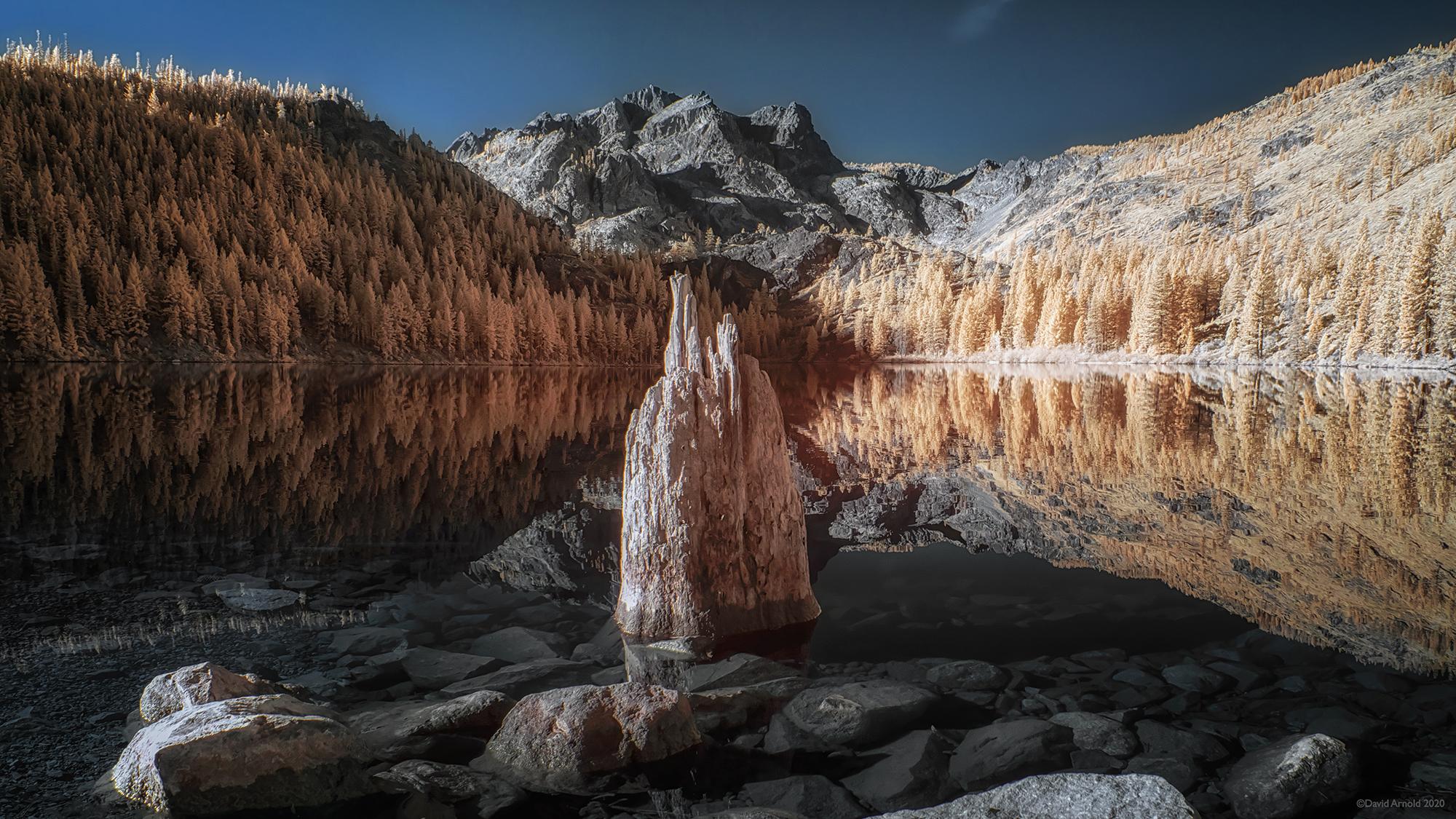 Stump. Sardine Lake, Plumas National Forest, California