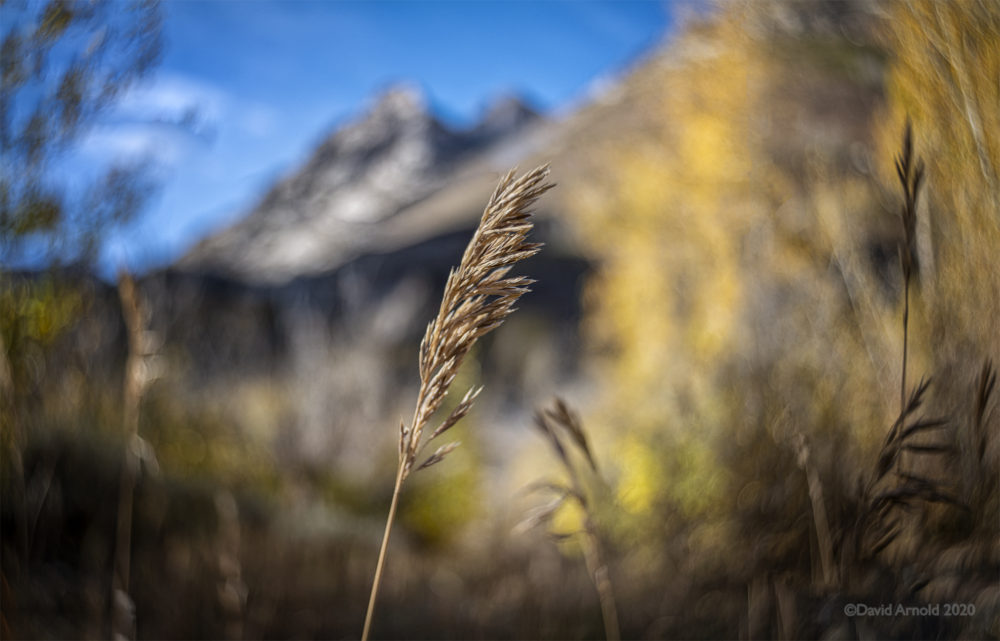 Grass with mountains in background