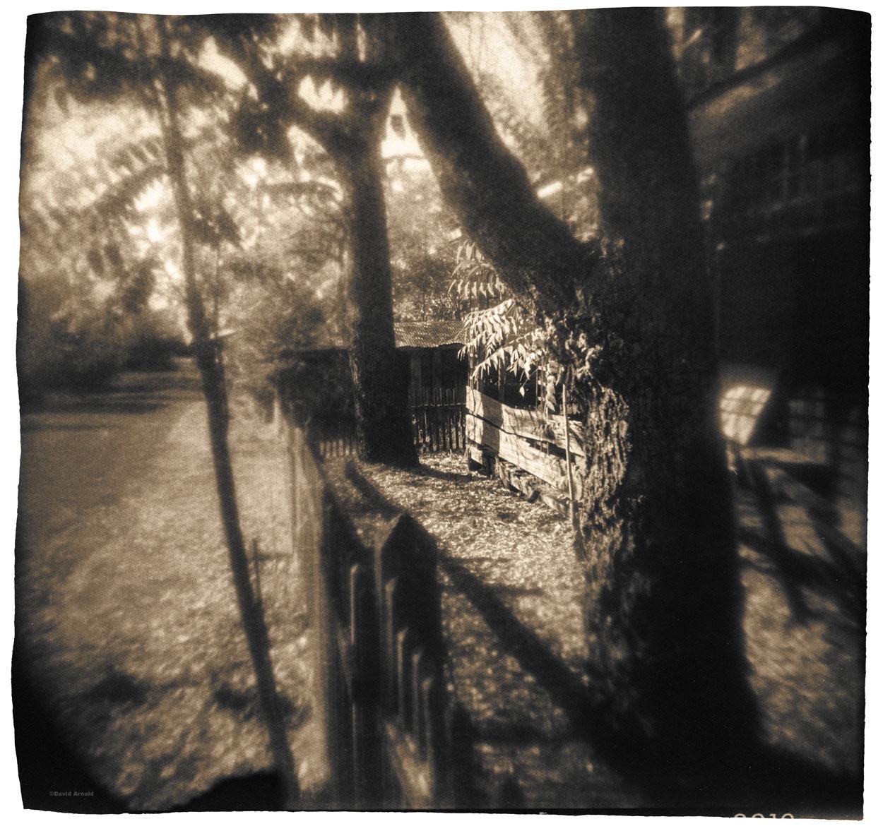 Trees, Fence, Main Street, Chinese Camp, Tuolumne County, California