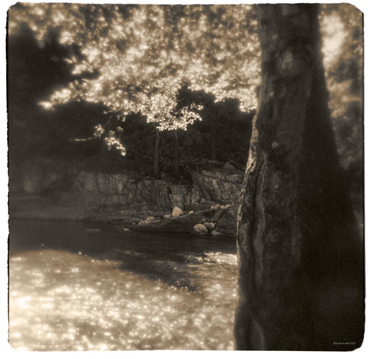 Oak Tree, Afternoon Light, Yuba River, Sierra County, California.