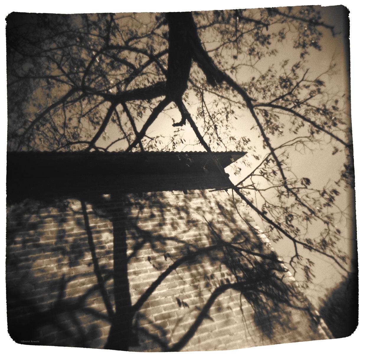 Tree and Shadow, Helena, Trinity County, California.