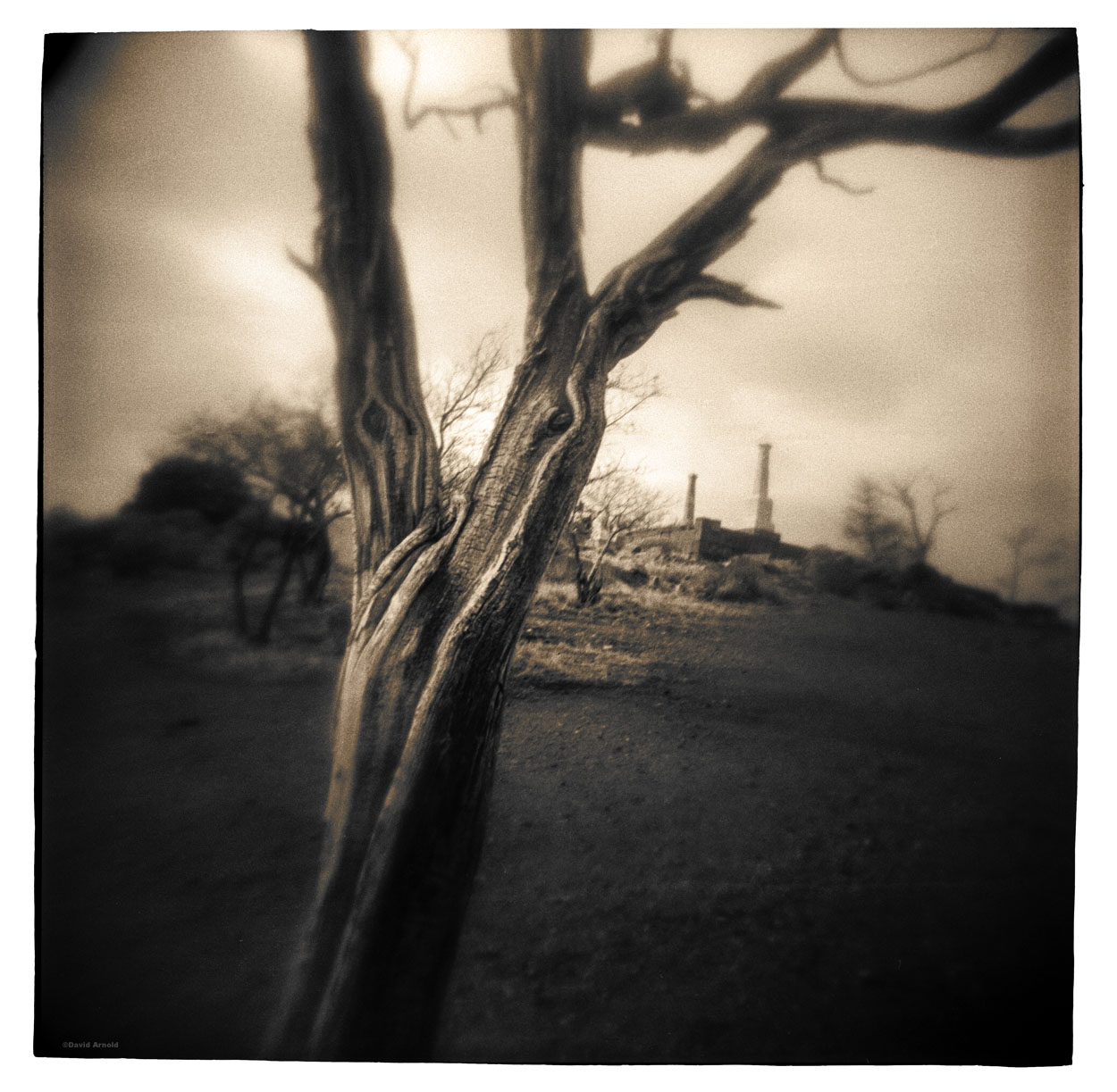V-Tree, Virginia City Cemetery, Virginia City, Story County, Nevada