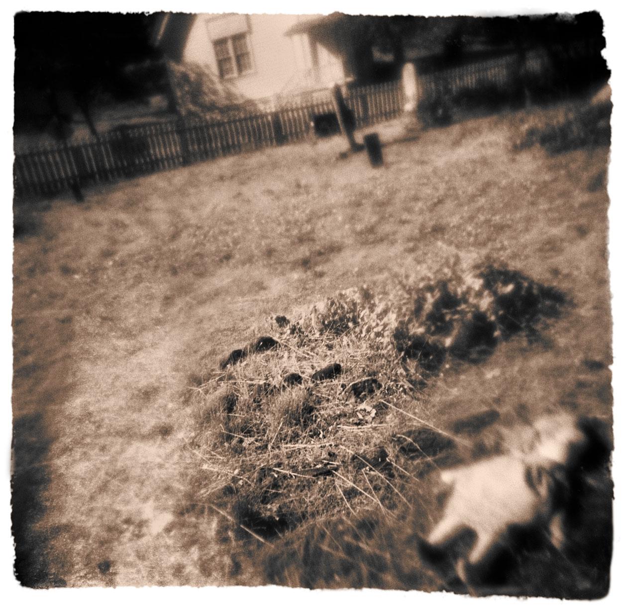 Doll, Cemetery, Lewiston, Trinity County, California