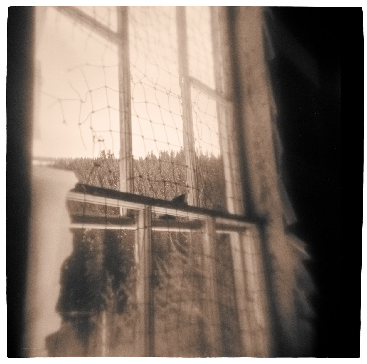 Window, Old School House, Forest City, Sierra County, California